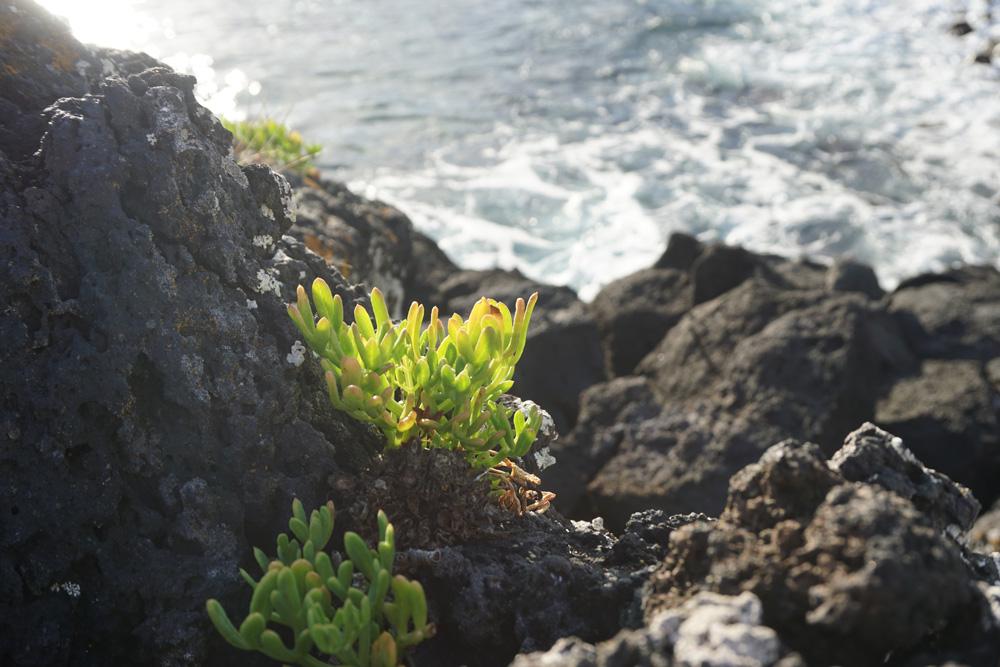 Azores11